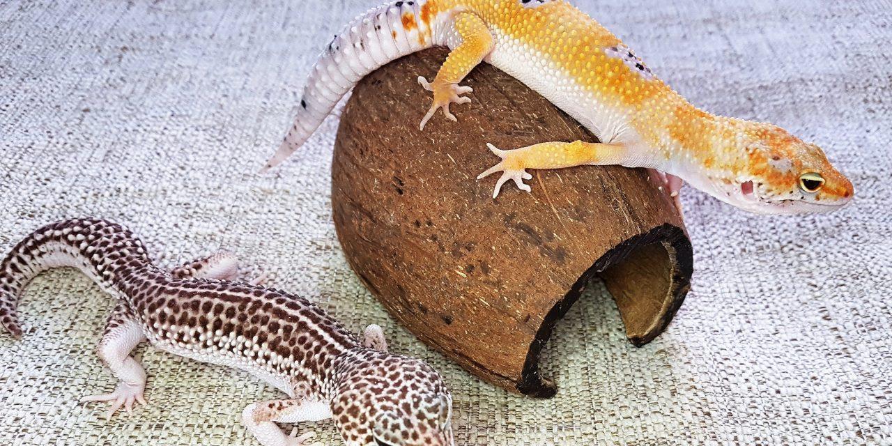 Мышей встречают по одежке, змею – по характеру