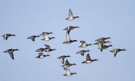 Над Новороссийском птицы облетают войну