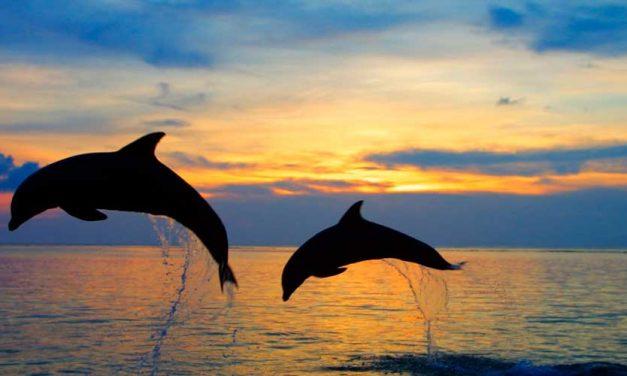 Как поставить диагноз дельфину?