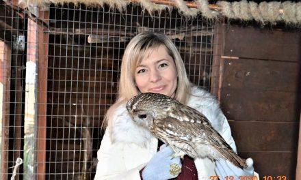Товарищи совы и другие хищники